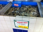 fresh Oysters for cheap!